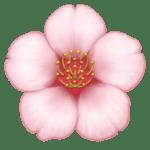 Bunga Sakura Facebook