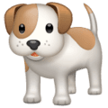 Anjing WhatsApp