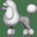 Anjing Pudel Apple