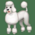Anjing Pudel WhatsApp 1