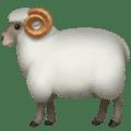 Domba Jantan Apple