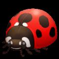 🐞 Kumbang Koksi Facebook