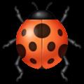 Kumbang Koksi WhatsApp
