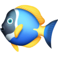 Ikan Tropis Facebook