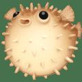 🐡 Ikan Buntal Facebook