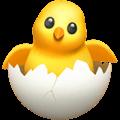 Anak Ayam Menetas Apple
