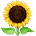 Bunga Matahari Facebook