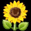 Bunga Matahari Samsung