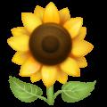 Bunga Matahari WhatsApp