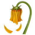 Bunga Layu WhatsApp