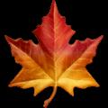 Daun Maple Apple